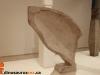 dinosaurus-rex-an-te-liu-mono-no-ma-gardiner-museum-toronto-an-te-liu-mono-no-ma-201304-jpg