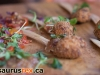 dinosaurus-rex-2013-second-harvest-torontotastedrex-28